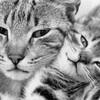 Mon-univers-les-chats