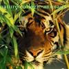 nature-ecologie-animaux