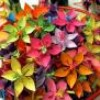 fleurdetrottoir