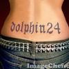 dolphin24