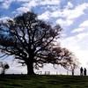 Pictures-tree