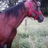 courses-de-poneys