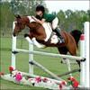 csadn-equitation