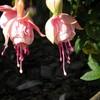 o-fleurs-o