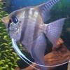 aquaclub59150