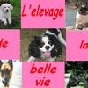 dogsdelabellevie