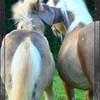 au-lilas-blanc
