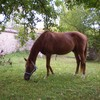 poney-villeray