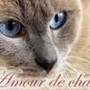 forum-amour-de-chats