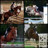 horsejumping31