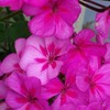 astic0t-fleuri
