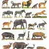 jadore-tout-les-animaux