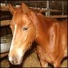 chevaux-eqivil