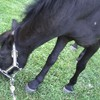 poney-parc-de-menois