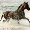 chevaux-bleu
