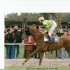 horsepassion87270