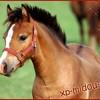 x-pony-l0v3-x
