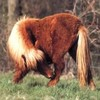 horsekiitiiz