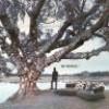 Dreams-arond-an-oak