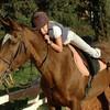 les-chevaux-que-jaime
