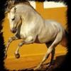 concours-cheval-poneys