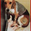 Save-tortured-animals