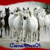 cheval4ever01