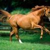 ponycountry