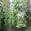 Bali092