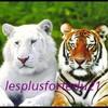 lesplusfortedu21