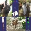 constance-chevaux