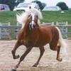 I-love-horses96
