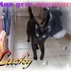 Lucky-Liife
