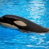 orcas67