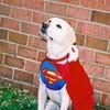 superdog06