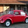 ladybug1973