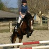 0o-best-horses-o0