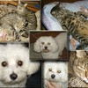 chats-chiens-68