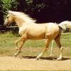 le-monde-sacre-du-cheval