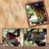 tigersparadise