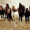 Xx-un-m0nde-chevaux-xX
