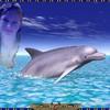 dauphin-sarah