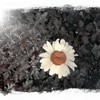 in-bloom23