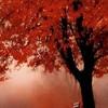 amitie-automne
