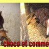 choco61