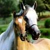 x-I-lOve-chevaux