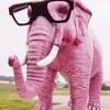 xxx-elephant-rose