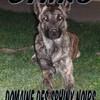 darkdog071