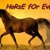 xx-horse4ever-xx