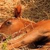 nos-amis-les-chevaux